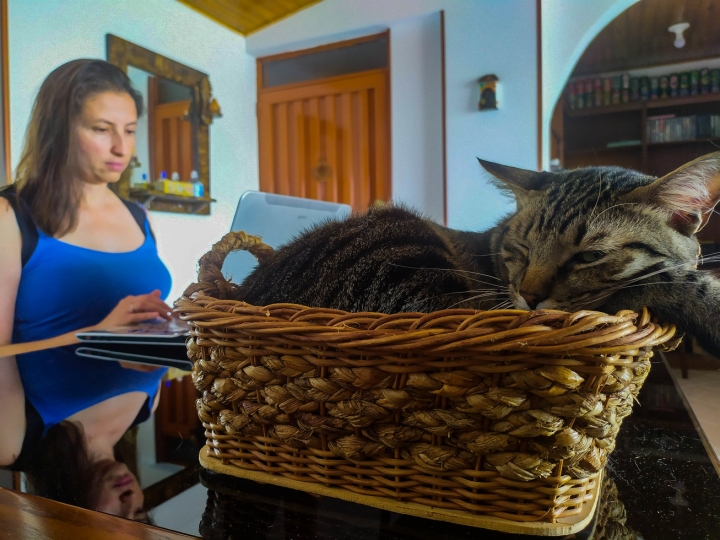 Trabajo en casa en compañía de Fito / 11 am, 13 de abril
