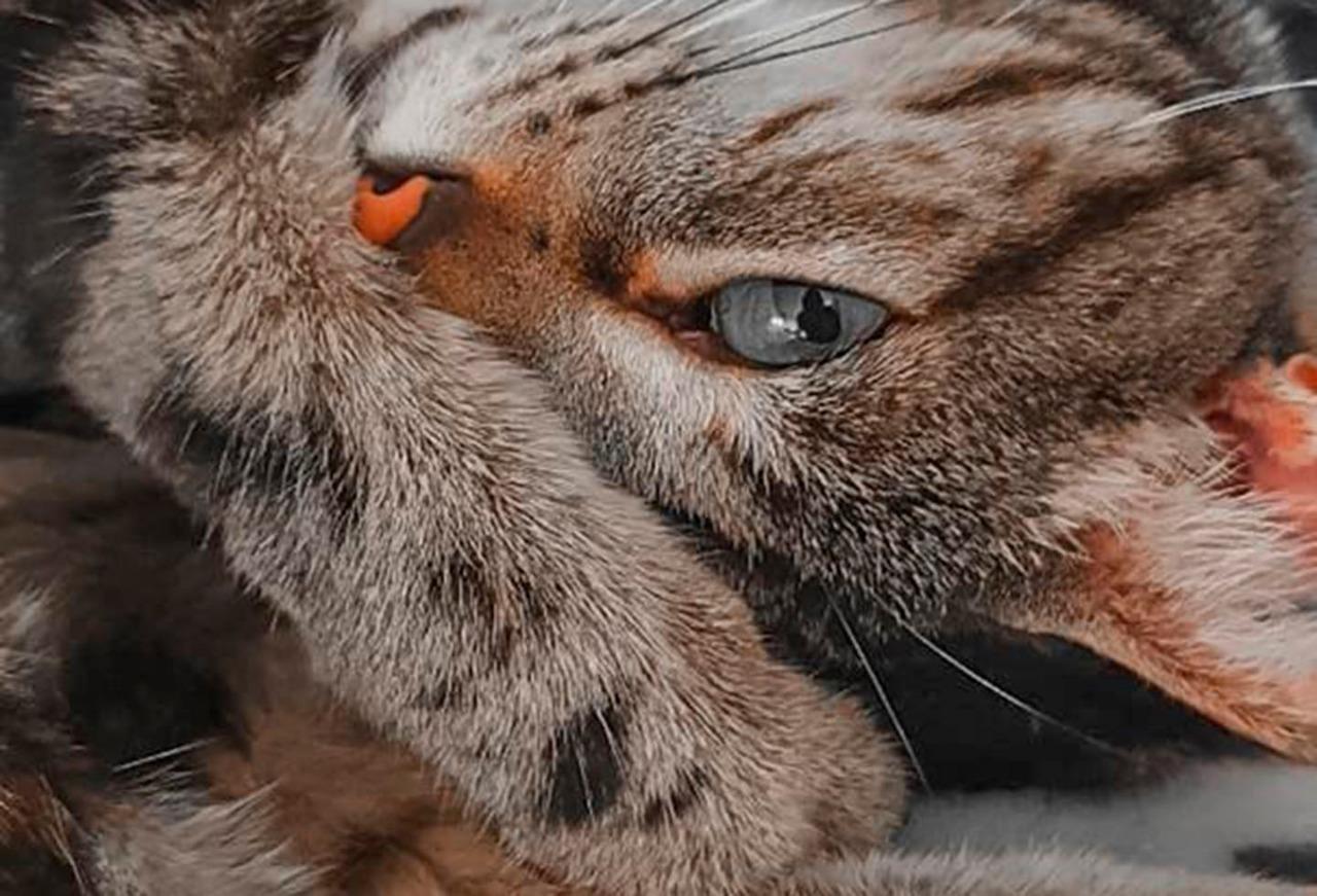 De las casas a las calles... abandono masivo de animales domésticos en pandemia