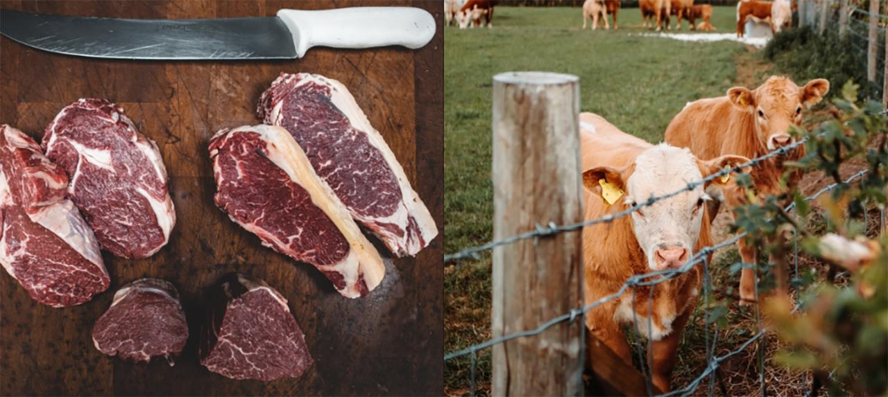 Dejar de comer carne, ¿una opción para salvar el mundo?