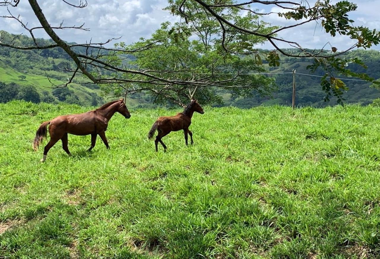 El caballo criollo colombiano, el valor está en la raza