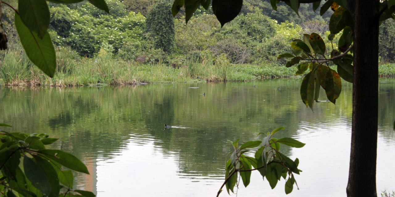 Animales en peligro de extinción: una de las problemáticas de los humedales en Bogotá
