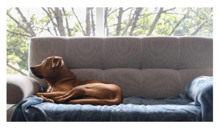 Leo, un perro criollo de Bogotá