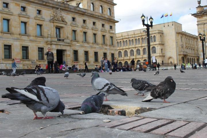 La Plaza de Bolívar es uno de los lugares más emblemáticos de Bogotá y ayer se levantaron sus adoquines para ser usados en contra de la fuerza pública.