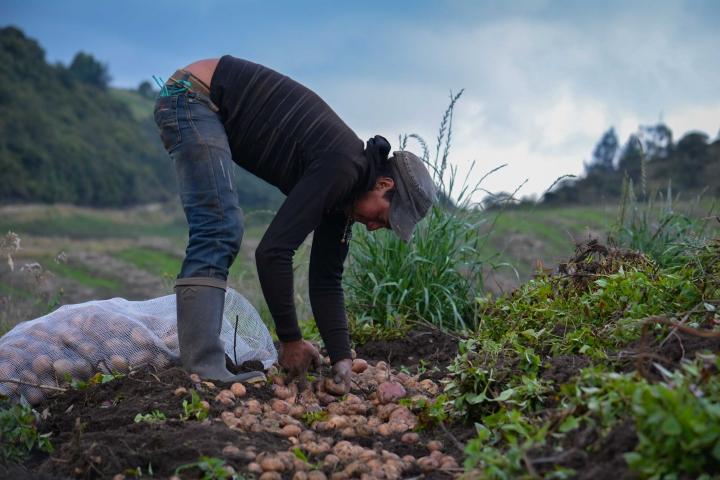 Con la ruana bien puesta: diario de un campesino colombiano