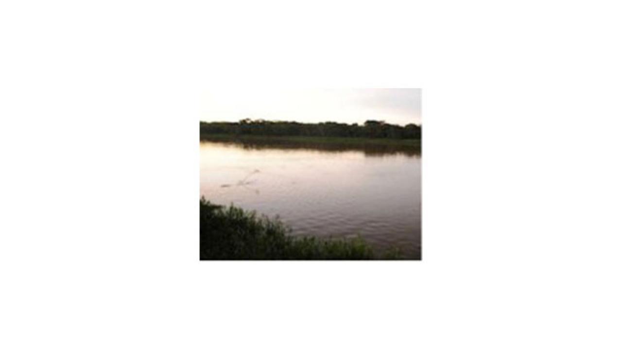 Deforestación, cultivos ilícitos y proyectos de concientización en la Amazonía