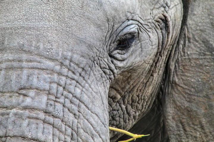 Acercamiento de elefante