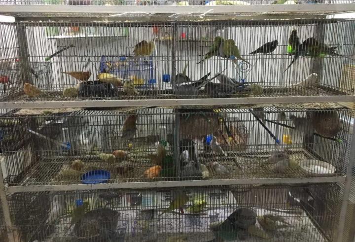 ¿Qué tan fácil es conseguir animales exóticos en Bogotá?