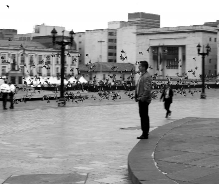 Palomas en la Plaza de Simón Bolívar. Crédito de la foto: Fátima Martínez