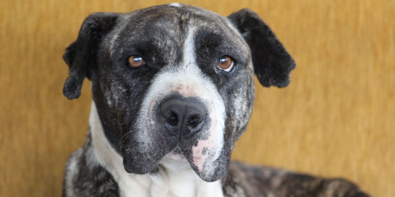 Fundaciones de perros y gatos en Bogotá: Una alternativa para los animales de la calle