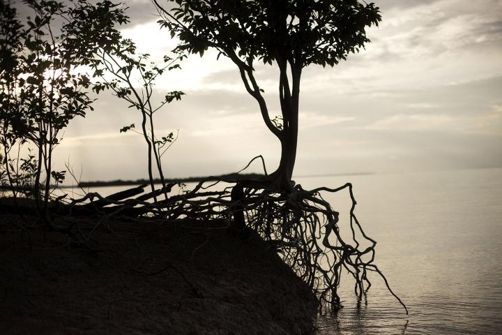 En 2020 el Amazonas perdió 2.3 millones de hectáreas, de las cuales 500 se encontraban en territorio colombiano