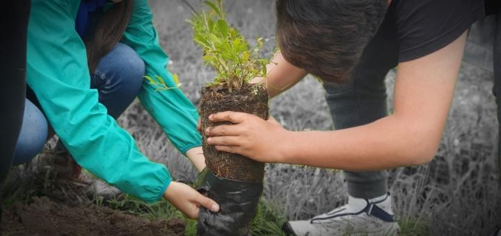 Plantación de arboles en la vereda Márquez