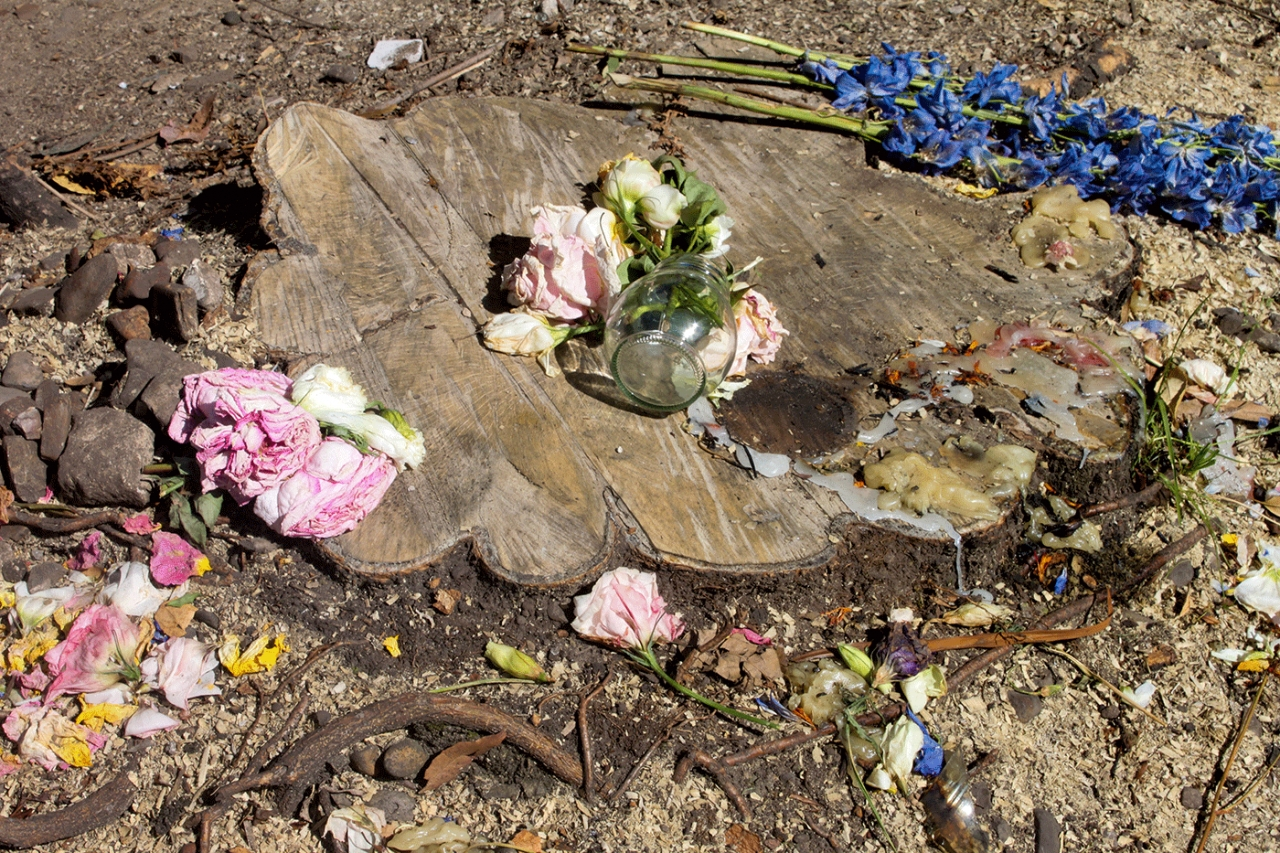 Controversia por la tala de árboles en Chicó Norte