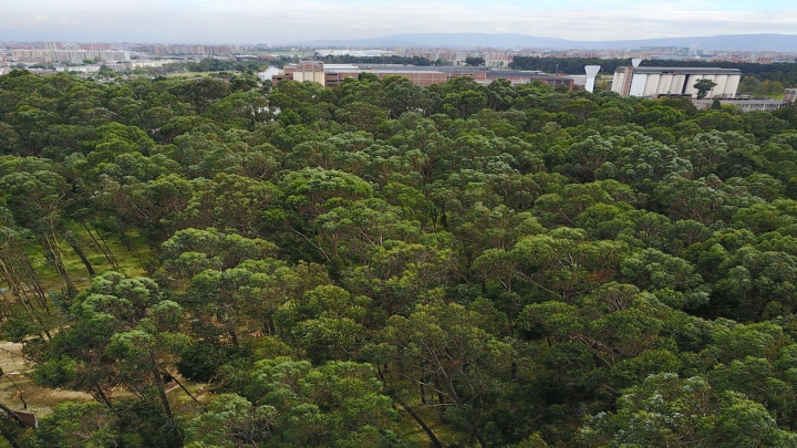 ¿Qué afectaciones tendría la tala del Bosque Bavaria?