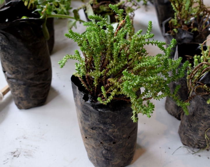 Plantas para los visitantes