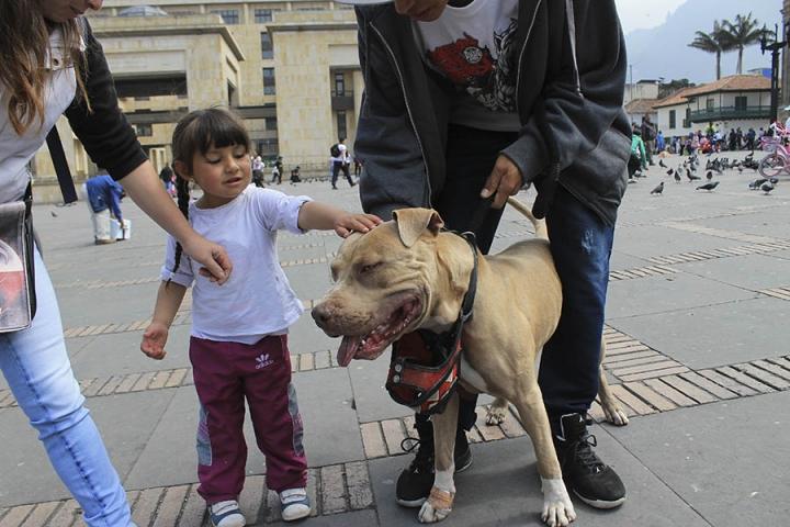 Artículo 124 del código nacional de policía y convivencia, apartado séptimo: Tolerar, permitir o inducir por acción u omisión el que un animal ataque a una persona, a un animal o a bienes de terceros