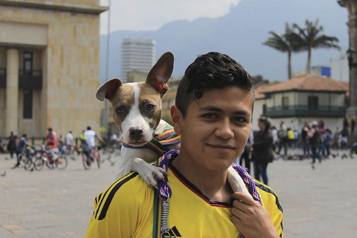 Freddy Carreño dedica parte de su vida a rescatar perros de la calle, en su hombro se encuentra Kira, la pitbull que rescató del Bronx y quien por falta de vacunas no ha podido caminar junto a los demás Pitbull