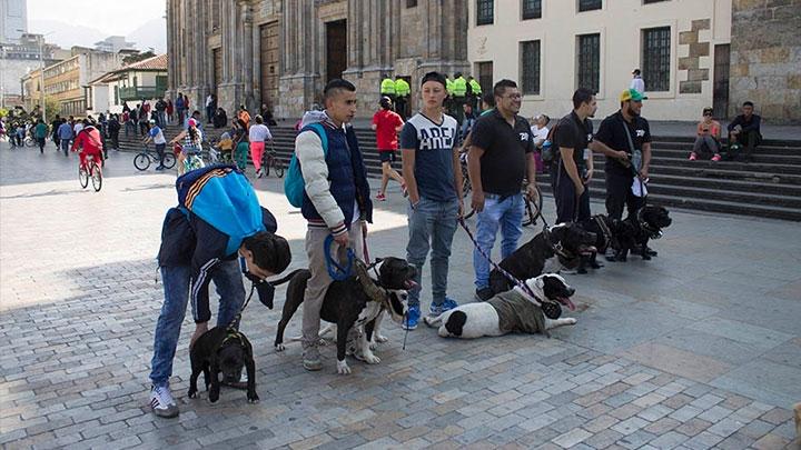 Organizado por parte de Pitbull Bogotá el Domingo 19 de Febrero, se realiza el platón por los derechos de los perros raza pitbull. Los líderes del plantón se encuentran alineados buscando presencia de la gente que transcurre la plaza de Bolivar.