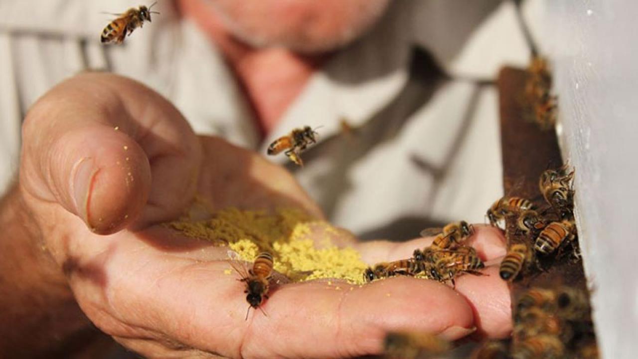 La apiterapia, el tratamiento médico que utiliza abejas