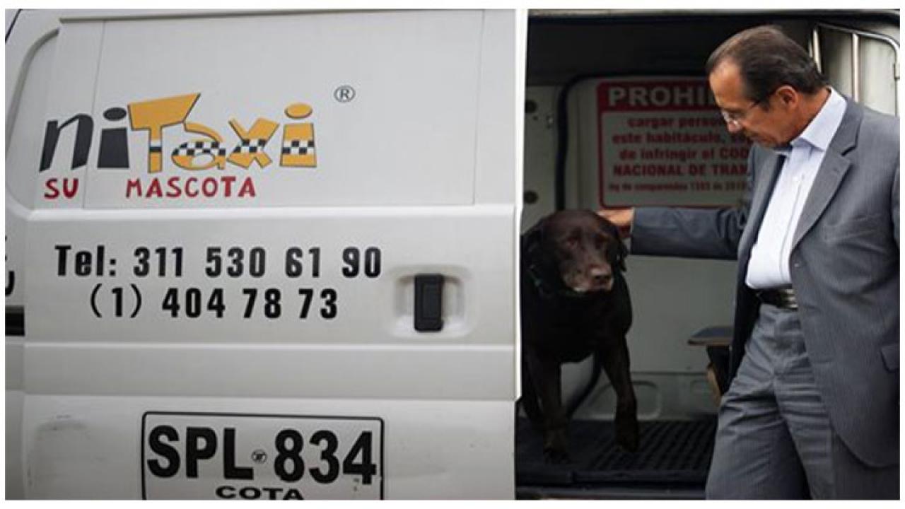 Taxi para su mascota