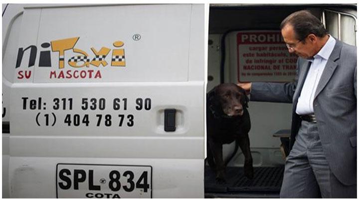 Canitaxi es la primer empresa en el transorte especializado de mascotas en Bogotá.