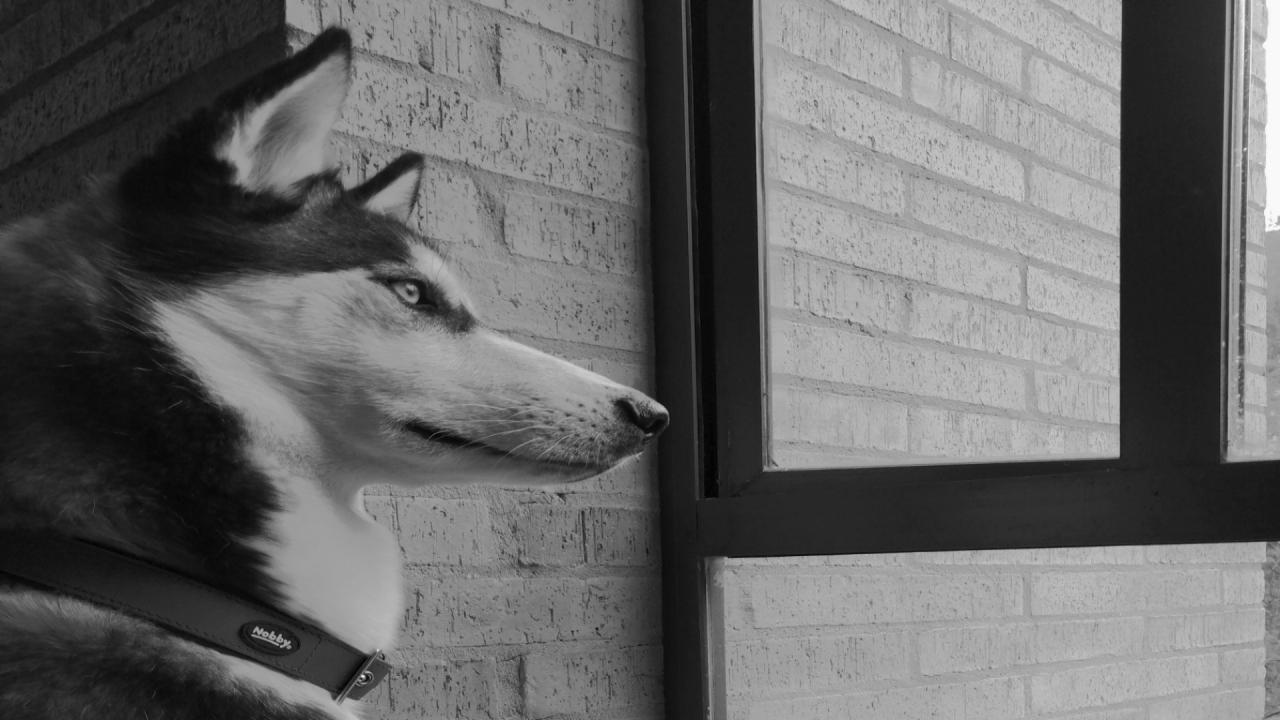 Las mascotas también han experimentado todas las etapas de la pandemia