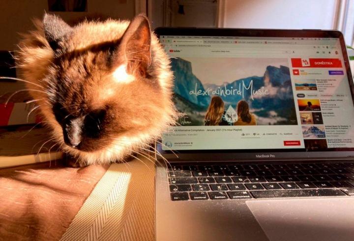 Retrato de Mimo, un gato recogido de la calle de aproximadamente 4 años