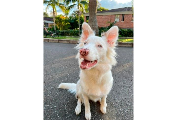 Mila es una perrita de 1 año, fue comprada durante la pandemia