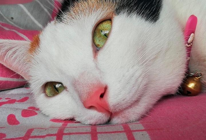 Jade es una gata criolla de 4 años