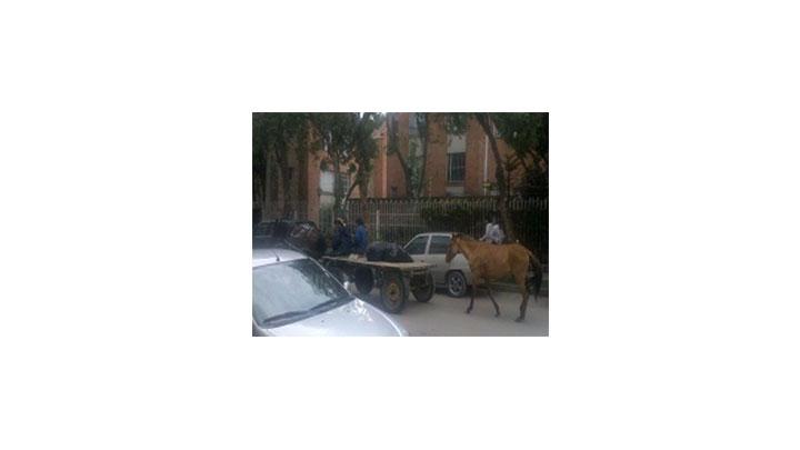 Algunos caballos aún circulan por las calles de Bogotá.