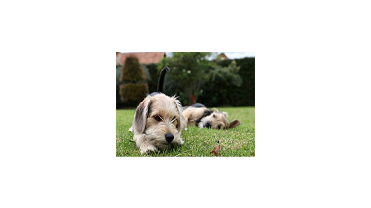 Recomendaciones a la hora de escoger una guardería canina