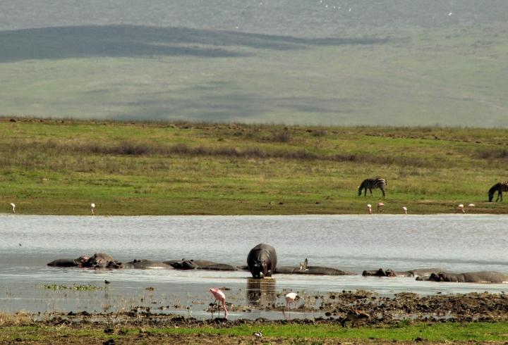 Crónica desde el cráter Ngorongoro, la caldera volcánica más grande del mundo