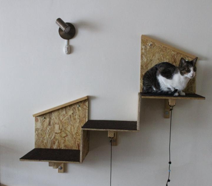 Abriendo las puertas de Gatos y Blues