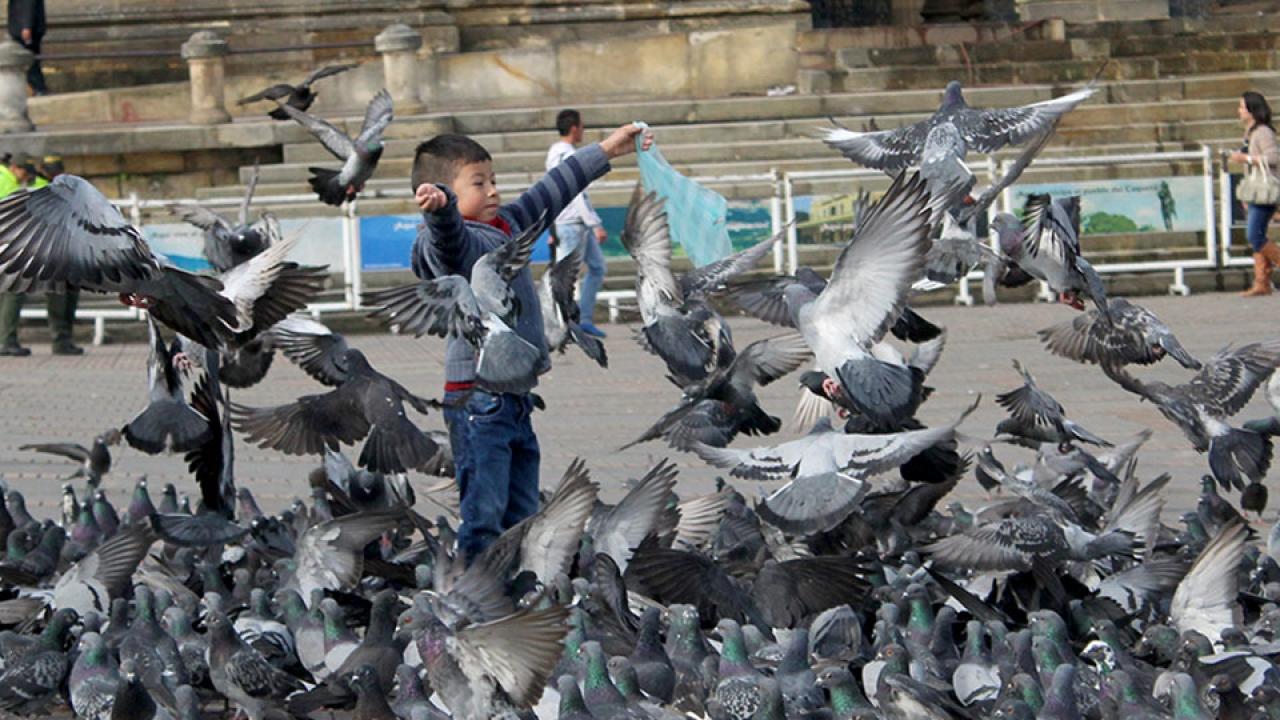 #FotoDelDía: Regocijo en la Plaza de Bolívar