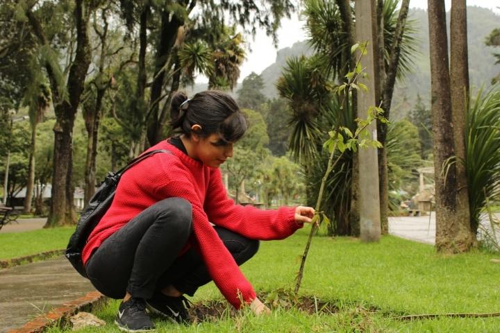 Siembra de árboles en el Parque Nacional Enrique Olaya Herrera. Crédito de la foto: Silvia Bayona