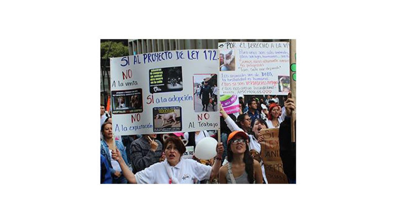 La muerte de Dominic revive el proyecto de ley 172 contra maltrato animal