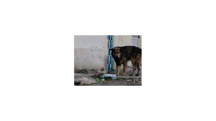 Perro abandonado en el norte de Bogotá.