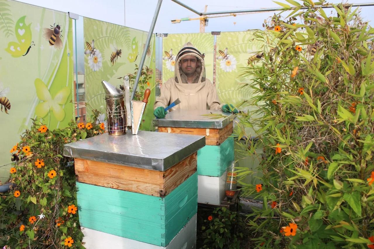 La propuesta para salvar a las abejas en vía de extinción
