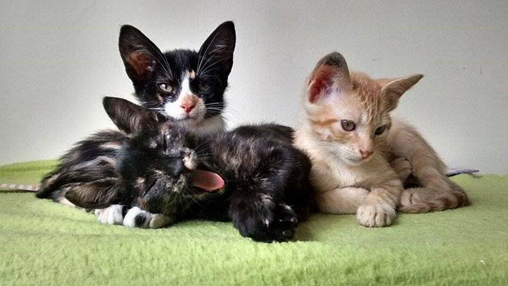 Tres gatos rehabilitados por el Orfagato, el cual rescata animales de la calle para luego darlos en adopción.