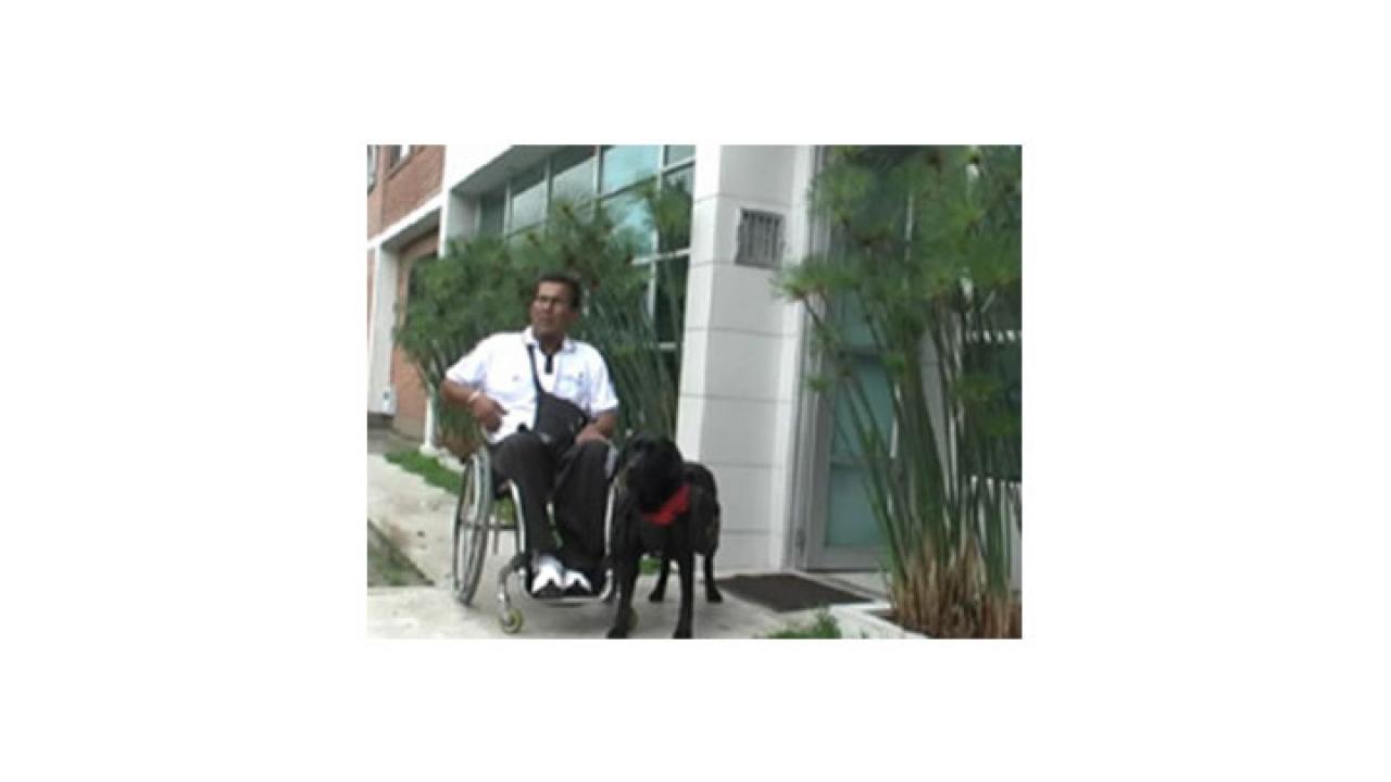 Animales que ayudan a vivir mejor a los discapacitados