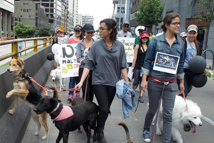No al maltrato animal' y '#LeyPríncipe, #YosoyPríncipe y #siganmelospeludos' eran las consignas representativas de la marcha.