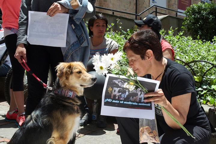 Marina Isaza, dueña de Príncipe, compartió un momento con todas las mascotas que acompañaron su causa.