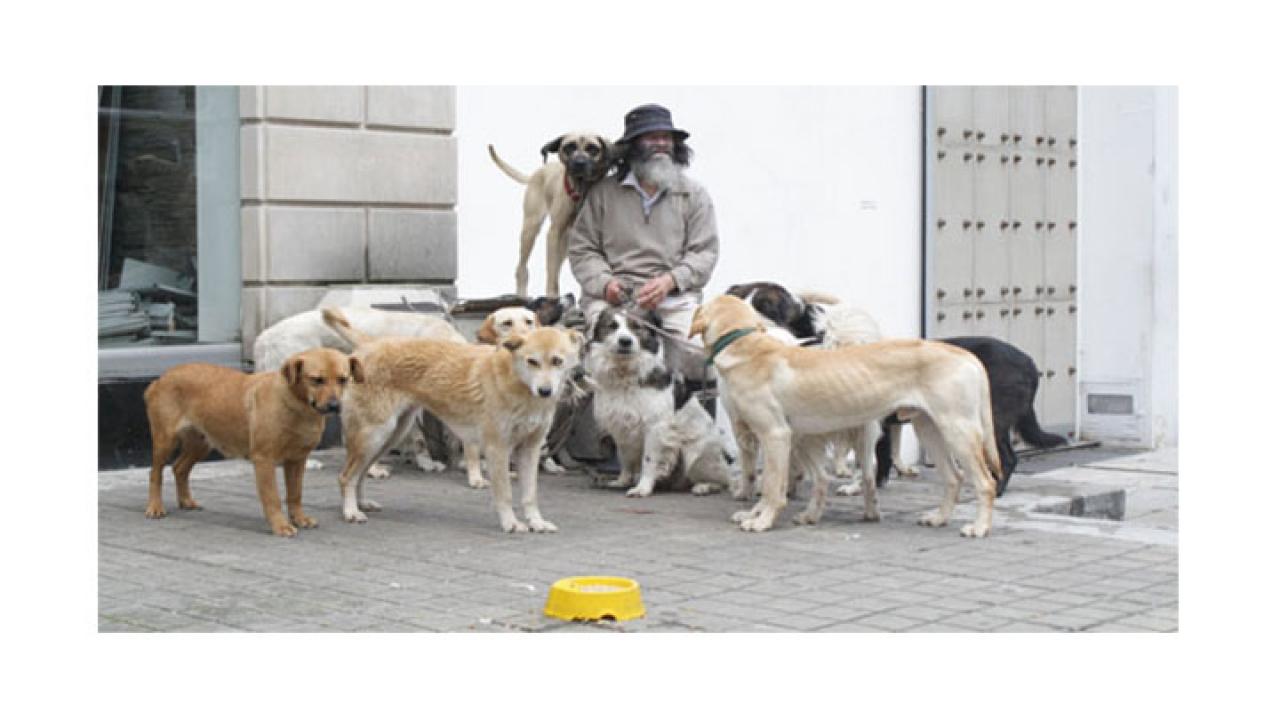 Alarmantes cifras de población canina
