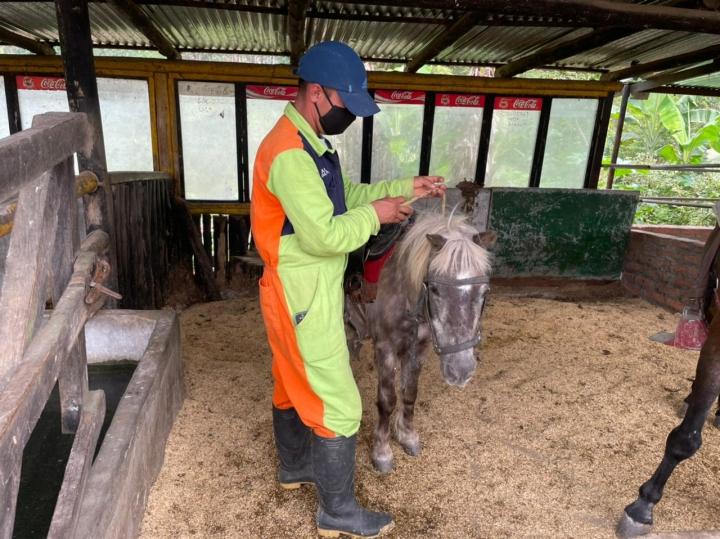 Martín Flórez de 31 años, es el encargado de cuidar a los caballos, ponys y llamas. Lleva 4 años trabajando en el Refugio.