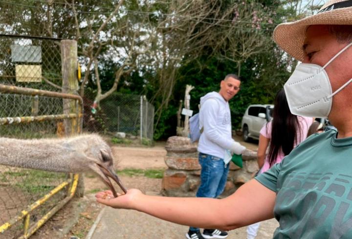 Cuando se inicia el recorrido por la granja, los turistas pueden encontrar  y alimentar a una de las aves más grandes del mundo, las avestruces.
