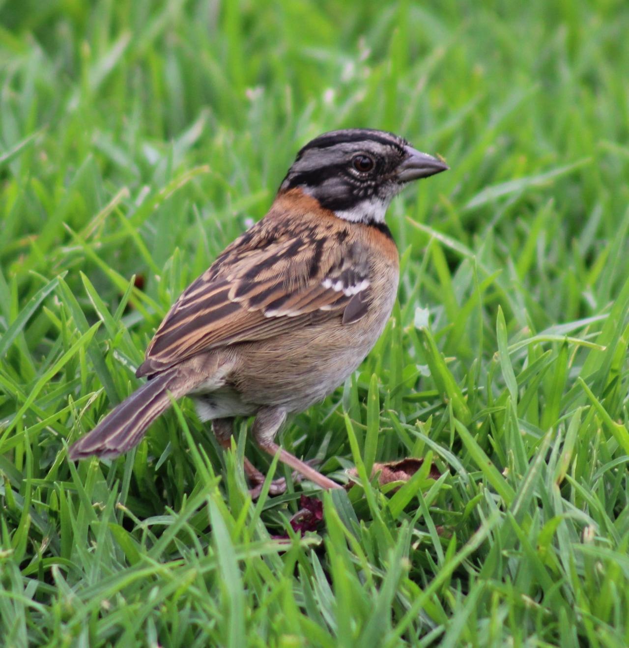 Temporada de aves migratorias en Bogotá