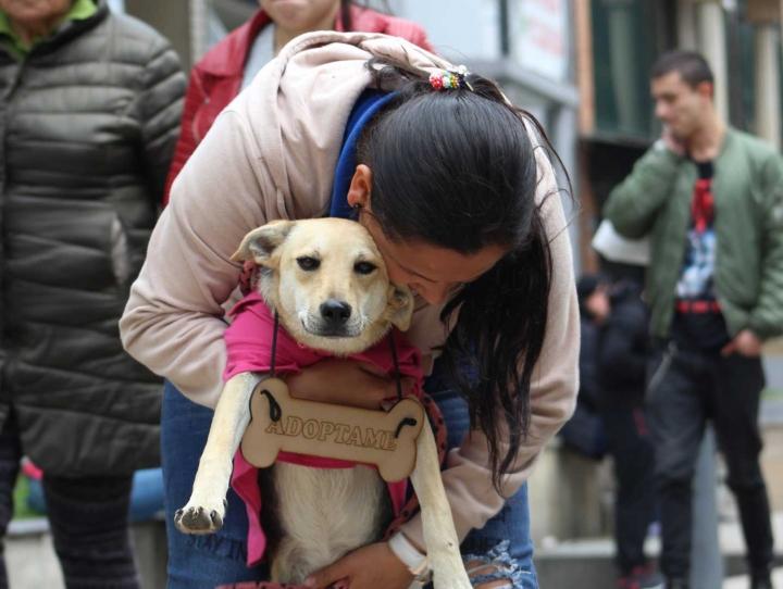En la imagen Sussy Varón junto a Púrpura durante la jornada de adopción realizada en la tienda para mascotas DiverPool en el Park Way.