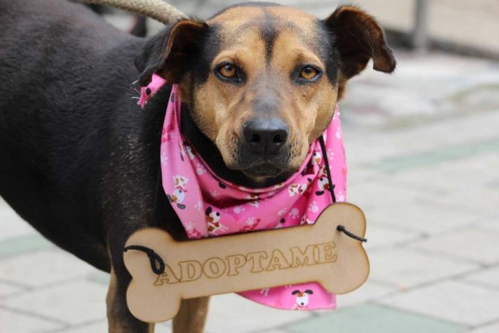 En imagen, Dulce, una de las perras callejeras que se encuentra en adopción.