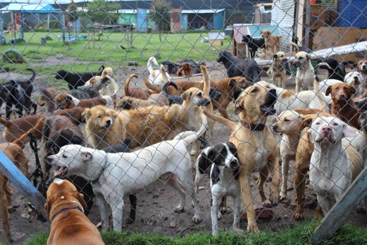 Según un estudio realizado por la Universidad de la Salle, en la localidad de Ciudad Bolívar hay aproximadamente 7 mil perros callejeros.