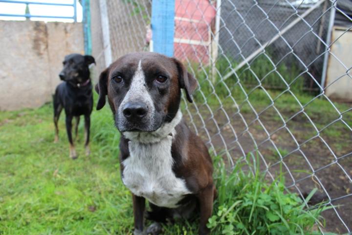 África es uno de los perros callejeros que se encuentran disponibles para adopción.