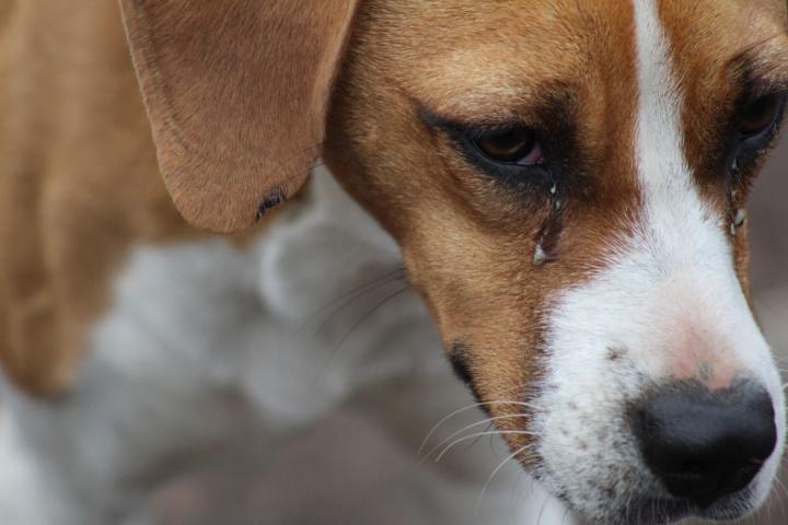Algunos de los objetivos que tiene la Fundación Milagrinos son rescatar y mejorar la calidad de vida de los perros y gatos callejeros, además de promover la adopción de animales rescatados y, finalmente, reducir el número de perros callejeros por medio de la concientización del cuidado animal.
